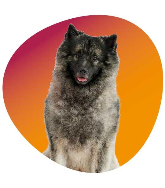 Therapiehund Interprax